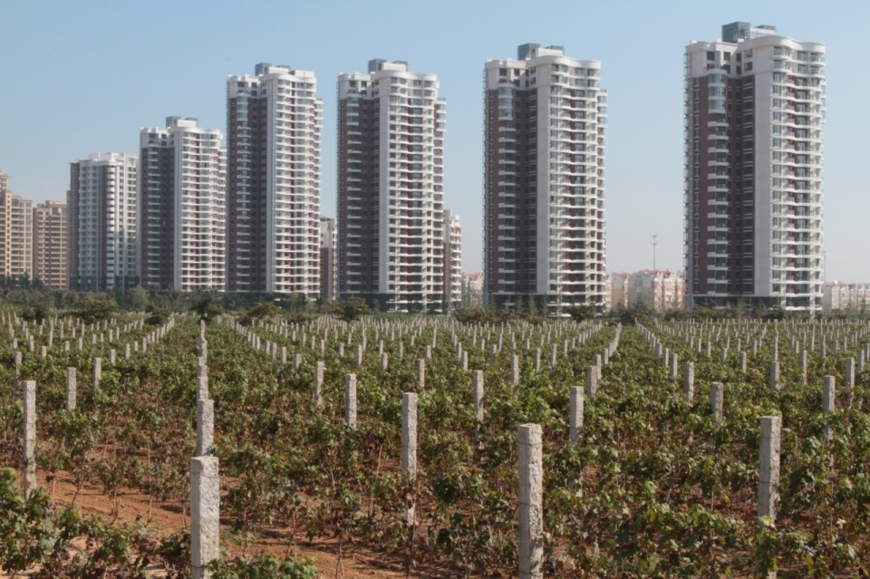 Apartment blocks tower over vines at Chateau Changyu Castel, Shandong Province, China