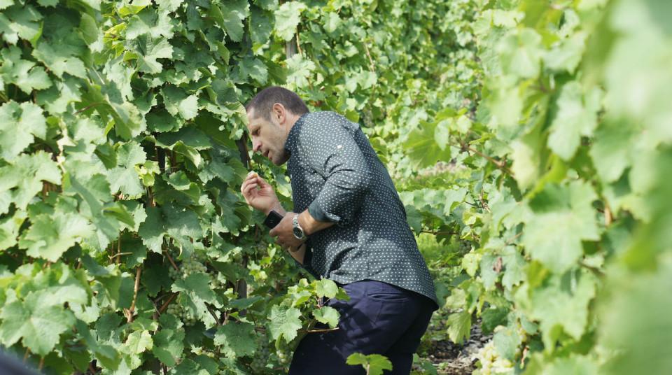 Andrzej Greszta vineyard