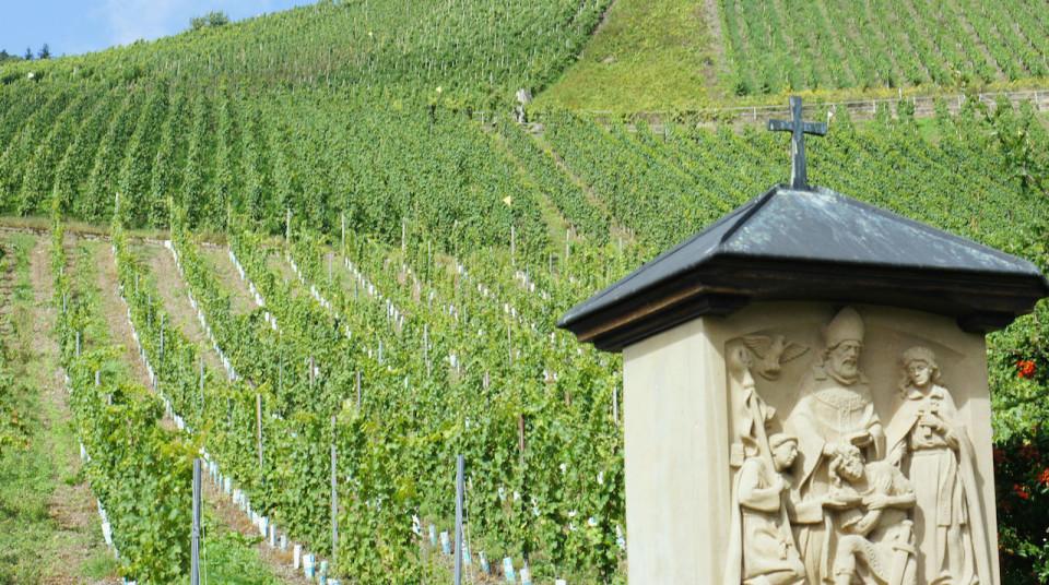 Greszta vineyard