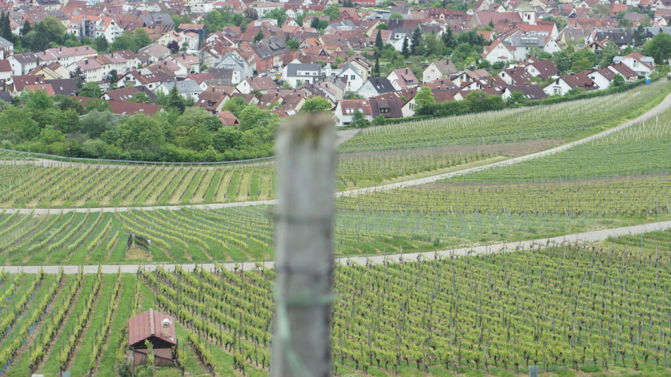 Wurttemberg vineyard